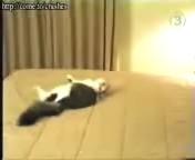 скачать бесплатно Видео 3gp Напуганная кошка для мобильного телефона