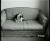 скачать бесплатно Видео 3gp Приколы про кошек для мобильного телефона