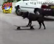 скачать бесплатно Видео 3gp Собака на скейте для мобильного телефона