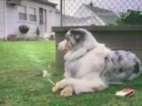 скачать бесплатно Видео 3gp Курящий пёс для мобильного телефона